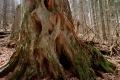 Slovensko určí hranice Karpatských bukových pralesov do februára 2018