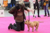 Výstava psov Nitradog 2020