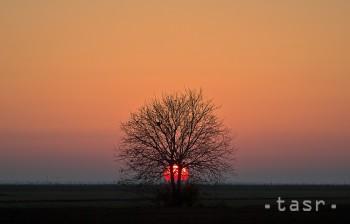100-ročný strom