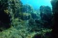 VIDEO: Najväčšia sústava koralových útesov má hodnotu 38 miliárd eur
