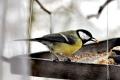 Vtáky sa vracajú z teplých krajín, domáce druhy začínajú hniezdiť