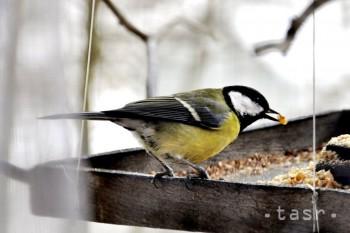 Prikrmovanie vtáctva možno sledovať cez internet