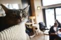 Nezvyčajný klub: Spoločnosť vám robia mačky a ceny si určíte sami