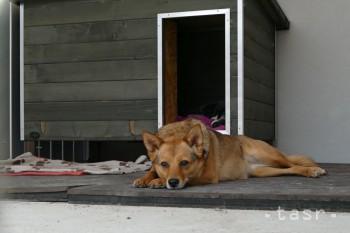 Držať psa na reťazi mimo verejných priestranstiev by sa mohlo zakázať