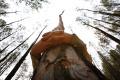 Rodičia opustili sedemročného chlapca v lese za trest