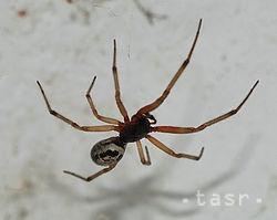 Tihányiovský kaštieľ vystavuje vyše 30 druhov pavúkov a škorpiónov