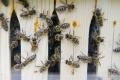Európska komisia chce chrániť včely, zakáže postreky na poľné porasty