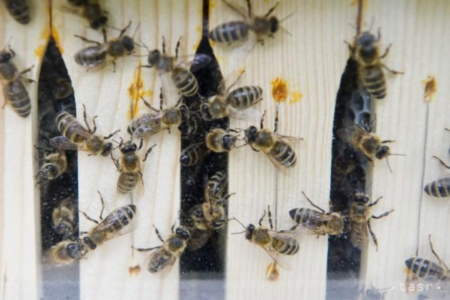 V Ružinove začne svoju púť mobilný včelín