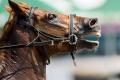 Kôň v Číne zapríčinil hromadnú nehodu, zomrelo dvanásť ľudí