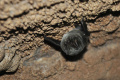 Na konci augusta rodiny s deťmi spoznávali svet netopierov