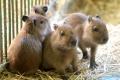 Najväčšia zoo v Európe sa nachádza na Slovensku