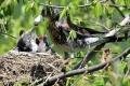 Zranené vtáky alebo opustené mláďatá si neberte domov