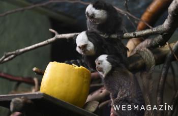 Košickú zoo otvorili po 101 dňoch, na leto pripravuje novinky