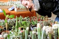 Pichľavá krása v košickej botanickej záhrade