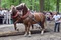 VIDEO: Spoluprácu človeka s koňmi predstavili furmani so záprahmi