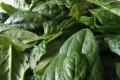 Špenát je ideálnou zeleninou pre vystresovaných ľudí