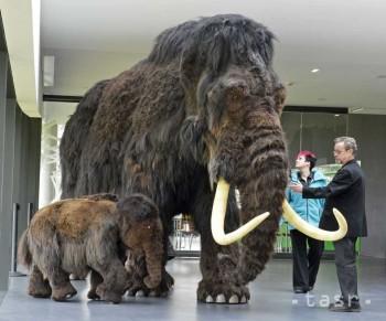 Vo Francúzsku objavili takmer kompletnú kostru mamuta