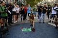 ONLINE: Krvavý teror v Barcelone: Španielsko smúti za obeťami