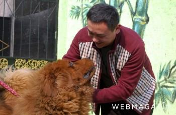 Ako sa žije najdrahšiemu psovi sveta?