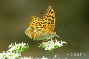 K vzdelávacej včelnici v Kokave nad Rimavicou pribudol Motýlí dom