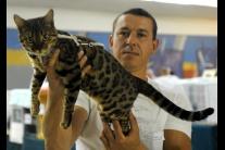 Výstava mačiek