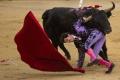 Ústavný súd zrušil zákaz býčích zápasov v Katalánsku