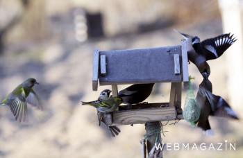 Kŕmidlo pre vtáky by sa malo pravidelne dezinfikovať