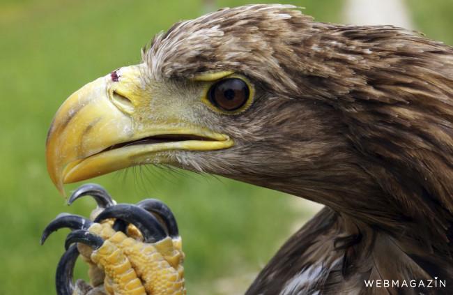 V Dunajských luhoch obmedzili výrub stromov počas hniezdenia orliaka