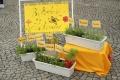 Okresné kolo súťaže Mladý záhradkár