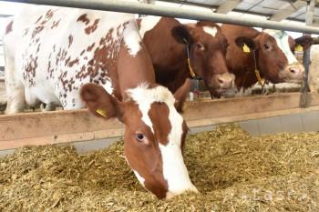 Do projektu podpory prvovýrobcov mlieka sa zapojilo 1760 chovateľov