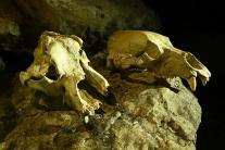 Prehliadka Pružinskej Dúpnej jaskyne