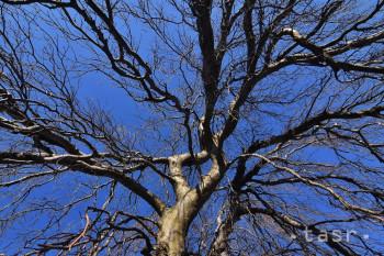 Za Strom roka 2020 sa dohlasovalo