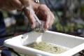 Zika sa už šíri aj na Floride, potvrdili prvé prípady prenosu komármi