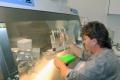 Dá sa skúmať DNA húb? Je to možné, pracujú na tom aj slovenskí vedci