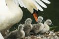 Ak nájdete vtáčie mláďa, neberte ho domov a nezachraňujte sami
