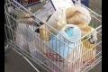 KOMORA:  Poukazuje na nevyváženosť v potravinovom reťazci
