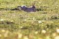 FOTO: Povodeň na Zélande:Divé králiky sa zachránili kurióznym spôsobom