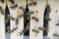Myjava: V ekoučebni ZŠ na Štúrovej ul. pribudli včelie úle