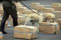 EÚ hlási úspech v boji proti obchodovaniu s drogami