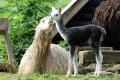 VIDEO: Košická zoo sa rozrástla o nové prírastky