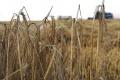 BECÍK: Zhodnotenie obilia je v SR malé, musíme počítať s jeho vývozom