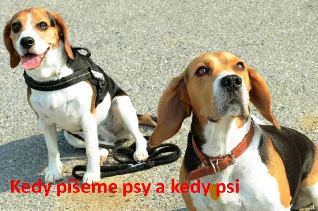 Kedy píšeme psy a kedy psi - Stredné školy - SkolskyServis.TERAZ.sk 37605ae0975