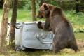 V Tatrách nie je zabezpečených 43 % odpadu a láka medvede