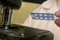 Kvapavka a syfilis trápi na Slovensku najmä mužov