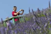 Unikátna levanduľová záhrada v Pezinku