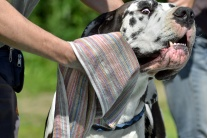 Celoštátna výstava psov všetkých plemien