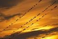 Zoznam zaznamenaných vtáčích druhov na Slovensku sa rozšíril