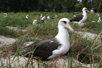 Najstarší vták sveta vysedel mláďa v 62 rokoch