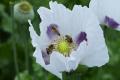 Trenčiansky kraj bude spoluprácovať s Včelárskym ekologickým spolkom