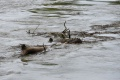 TRAGÉDIA V RUŽOMBERKU: Vo Váhu sa utopil mladý muž, zrejme kajakár
